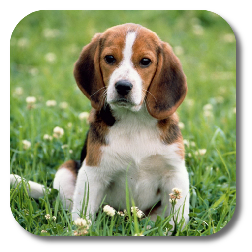 App Insights Dog Live Wallpaper