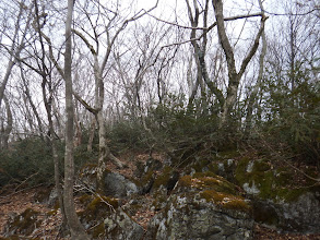 カレンフェルトと藪を越え