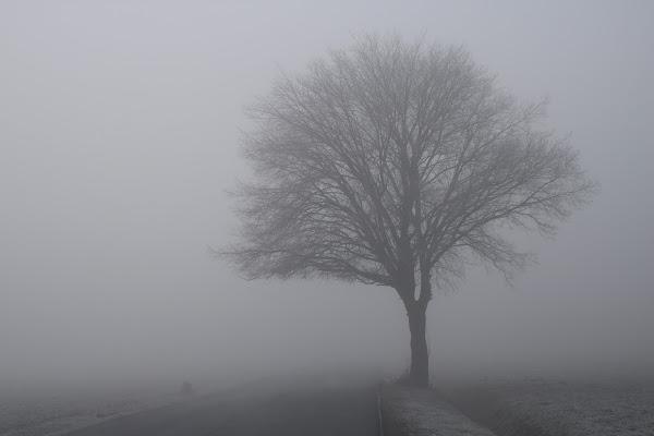Nebbia di Mar-co