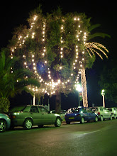 Photo: Holiday lights in the trees along the promenade.