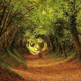 Autumn Tunnel 2018 by Tim Clifton - Landscapes Forests ( autumnal, forest, leaves, autumn colours, tree, autumn colors, autumn leaves, autumn, trees, forests )
