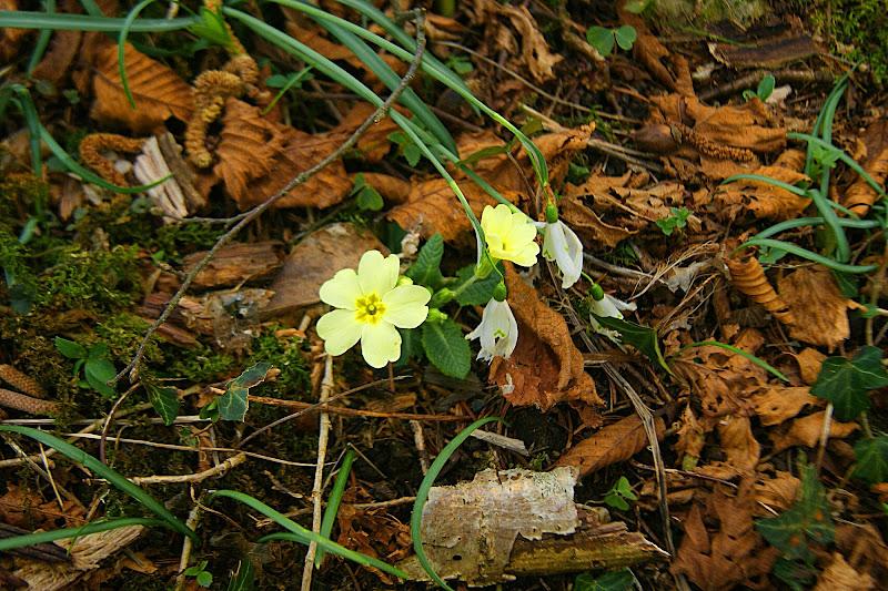 Muore l'inverno e nasce la primavera di danilo56