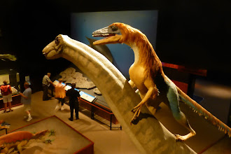 Photo: Why does that dinosaur have feathers?