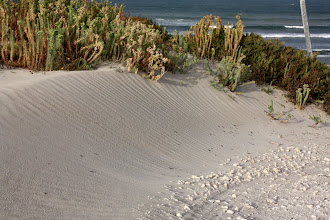 Photo: Year 2 Day 226 - Sand Dunes at The Granites
