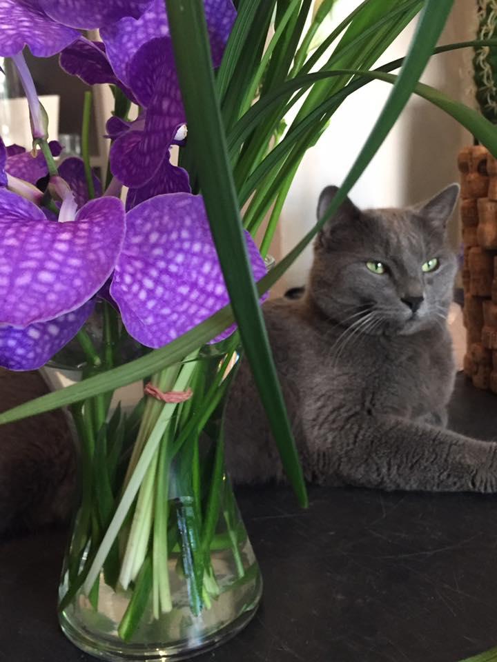 Camillo e i fiori di Marrty