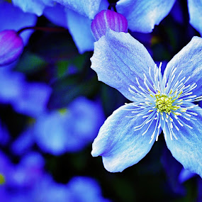 Blue by Love Time - Flowers Flower Gardens ( nature, blue, garden, flower,  )
