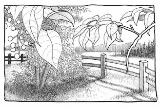 Photo: Georgeson Botannical Garden (pen & ink sketch)