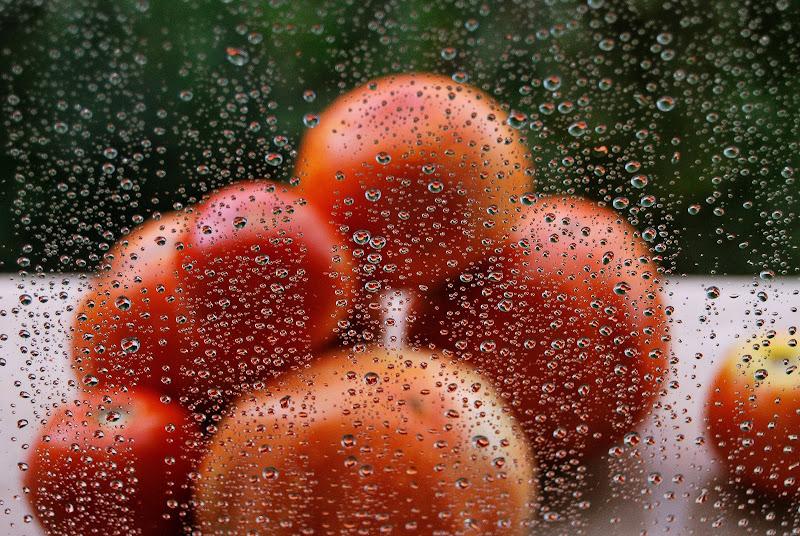 Pomodori alla finestra sorpresi da un acquazzone. di rosy_greggio