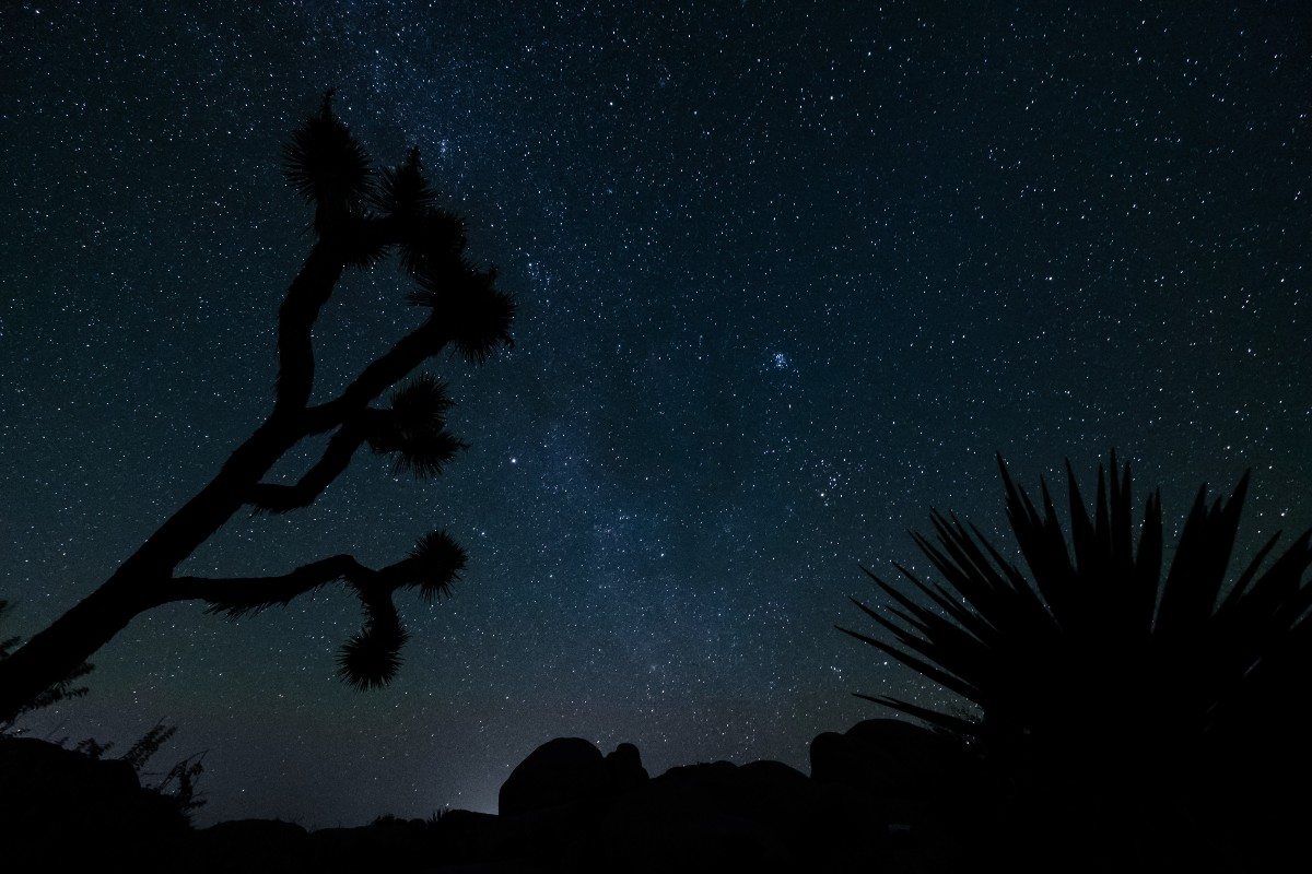 An iconic Joshua tree against the night sky in Joshua Tree, one of nine California national parks