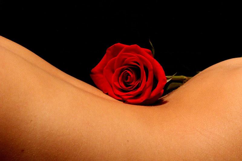 Una Rosa di abi313