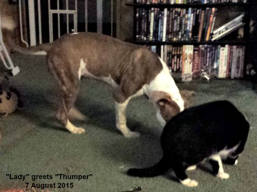 Two adopted pets greet each other