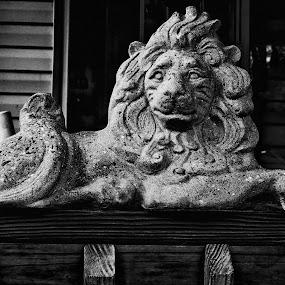 Stone Lion by Grady  Welch - Black & White Objects & Still Life ( b&w, white, black, black and white, lion, stone )