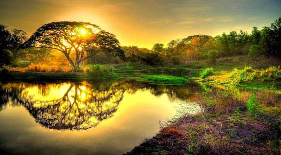 Nature Wallpapers Hd 4k Backgrounds Images Apps On Google Play