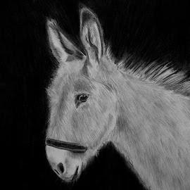 Donkey by Carmina Shan - Drawing All Drawing ( ass, donkey, donkey with halter, furr, grey donkey )
