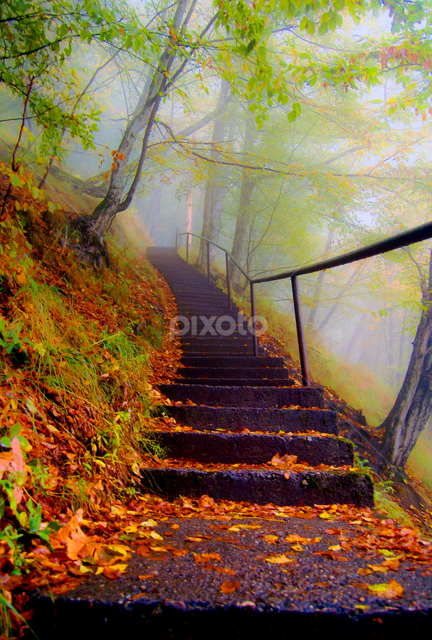 Steps in autumn by Daniel Ighisan - Landscapes Travel