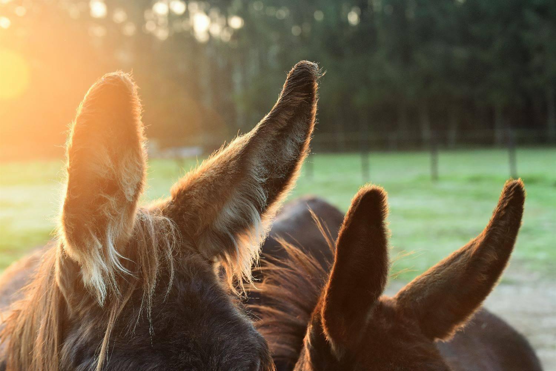 Workshop voor Hoogsensitieve Volwassenen: De ezel is een prikkelslikkerdier