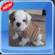 Cute Bulldog Photo Frames for PC-Windows 7,8,10 and Mac