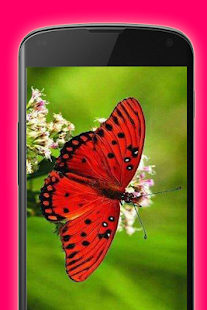 imagenes de mariposas Screenshot