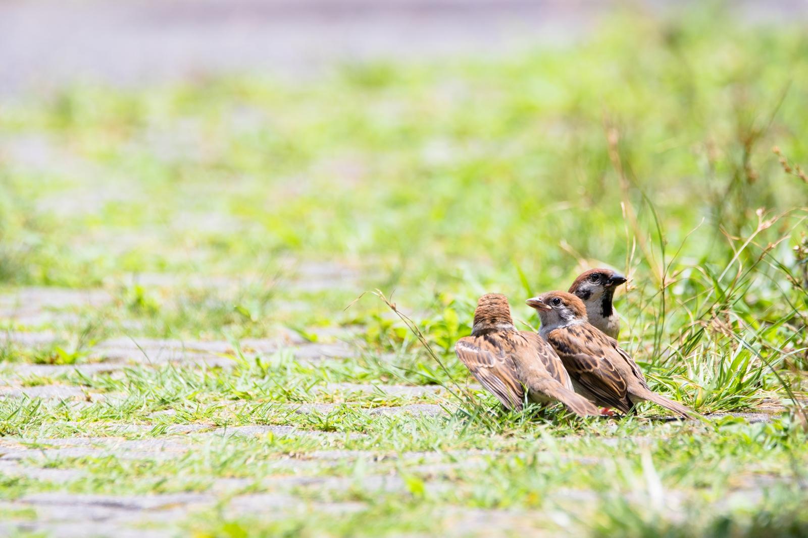 Photo: 「社会科見学」 / Social studies field trip.  あれはなに? これはなんだろう? 質問の飛び交う社会科見学 人の世界は疑問がいっぱい  Sparrow. (スズメ)  Nikon D500 SIGMA 150-600mm F5-6.3 DG OS HSM Contemporary  #birdphotography #birds #kawaii #ことり #小鳥 #nikon #sigma  ( http://takafumiooshio.com/archives/2755 )