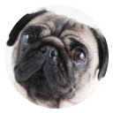 Pug HD New Tabs Popular Pets Themes Icon