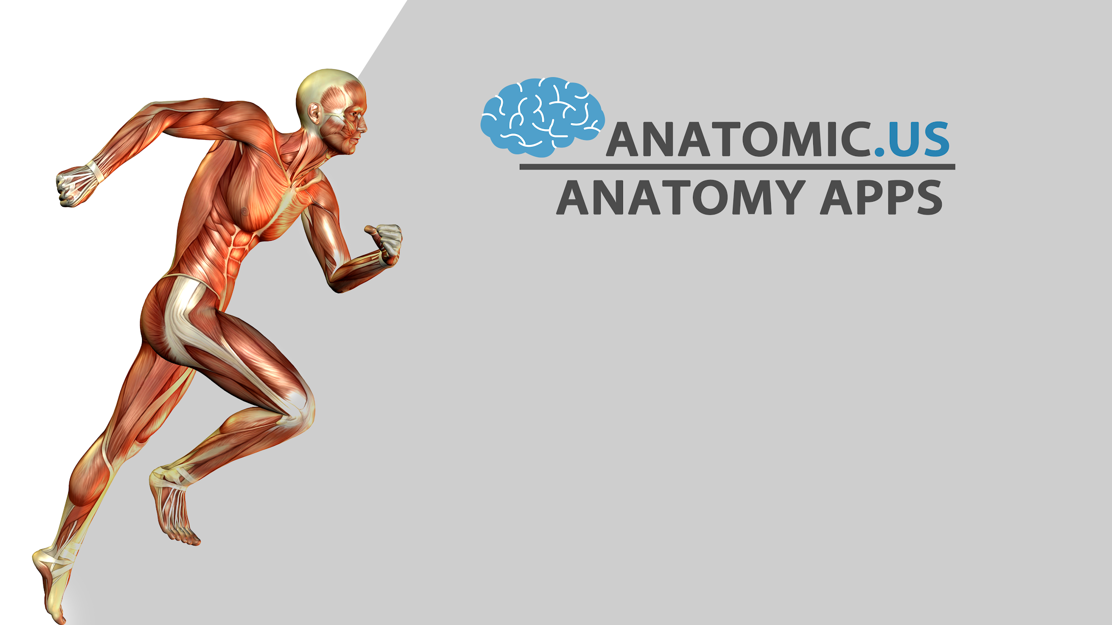 Anatomicus Anatomy Apps - Apps on Google Play