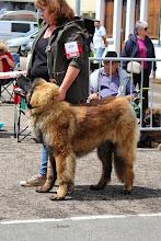 Photo: Classe Puppy Mâle : Iwoko du Moulin de Fontcastel