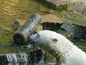 Photo: Knut hat den Baumstamm aufs Trockene gebracht ;-)