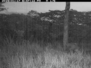 Photo: A bushpig; Um potamochero ou javali-africano.
