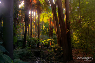Photo: Botanical Gardens, Melbourne