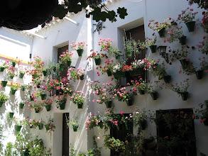 Photo: La Fiesta de LOS PATIOS (Córdoba)