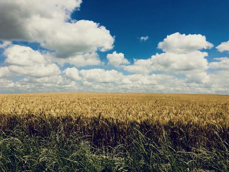 Campi di grano in Normandia  di annabus58