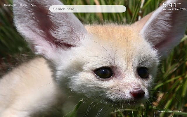 Fennec Fox HD Wallpapers&Themes