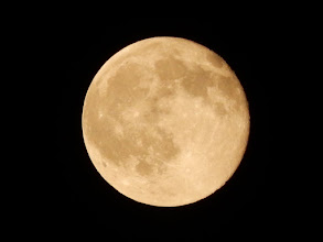 Photo: 昨夜はストロベリームーンの夜でしたが、帰宅が月の出前だったこともあり、月を見てませんでした。そんなわけで、今夜の月、ストロベリームーン+1夜の月、十六夜の月。十六夜(いざよい)という言葉の響きが好きです。
