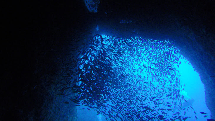 Poor Knights Islands New Zealand (25 Best Dive Sites in the World to Put on Your Bucket List).