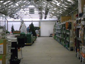 Photo: Kiddo wanted to check out the garden center, we found Christmas trees and lights, he was so excited.
