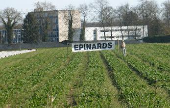 Photo: Prêts à être cueillis par les clients de la ferme.