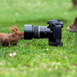 curiosita' by Nando Scalise - Animals Other