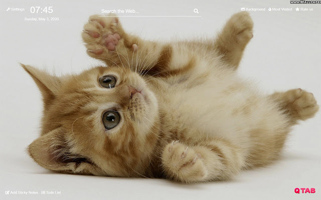 Cute Cats Kittens Wallpapers Hd For New Tab