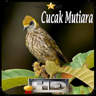 Cucak Mutiara Top - náhled