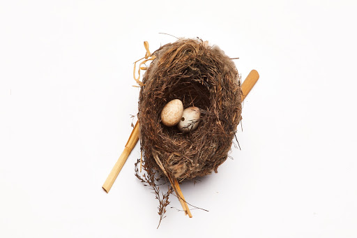 Reed Warbler nest and eggs