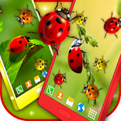 Ladybugs Live Wallpaper