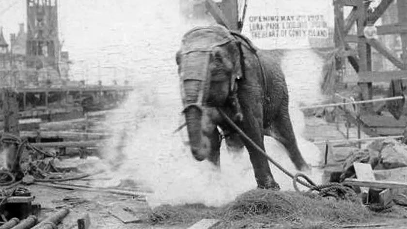 La elefanta electrocutada.