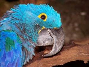 parrot-talk-2-300x225.jpg