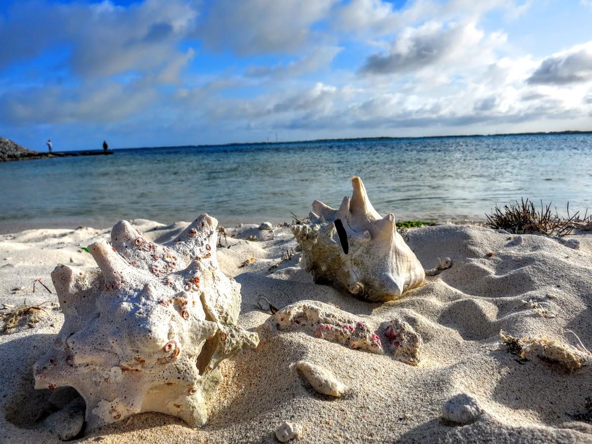 Bonaire. Washington Slagbaai National Park Hiking. Lake Bay and Conch