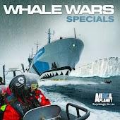Whale Wars Specials