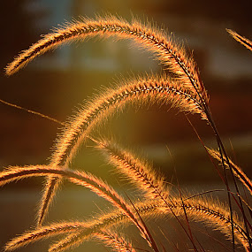 by Mohamed Habib - Nature Up Close Leaves & Grasses (  )