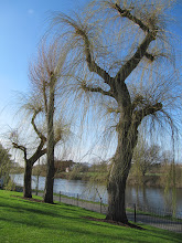 Photo: The willow trees (right by the faculty flats) just beginning to show their new green leaves