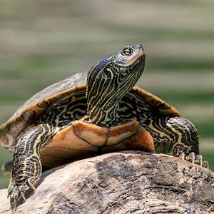 21 turtle.jpg
