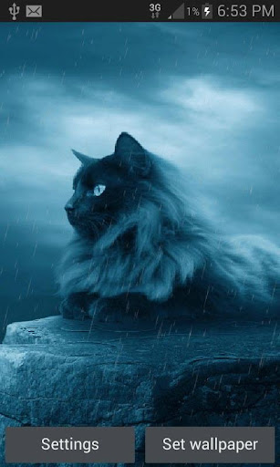 black cat in rain lwp screenshot 1