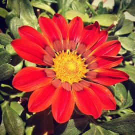 by Arber Shkurti - Novices Only Flowers & Plants